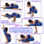 TITTIBHASANA EVOLUTION